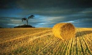 After the Harvest_jpg